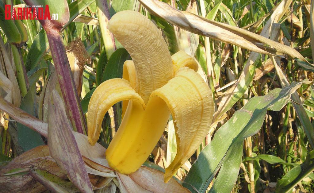 banana românească