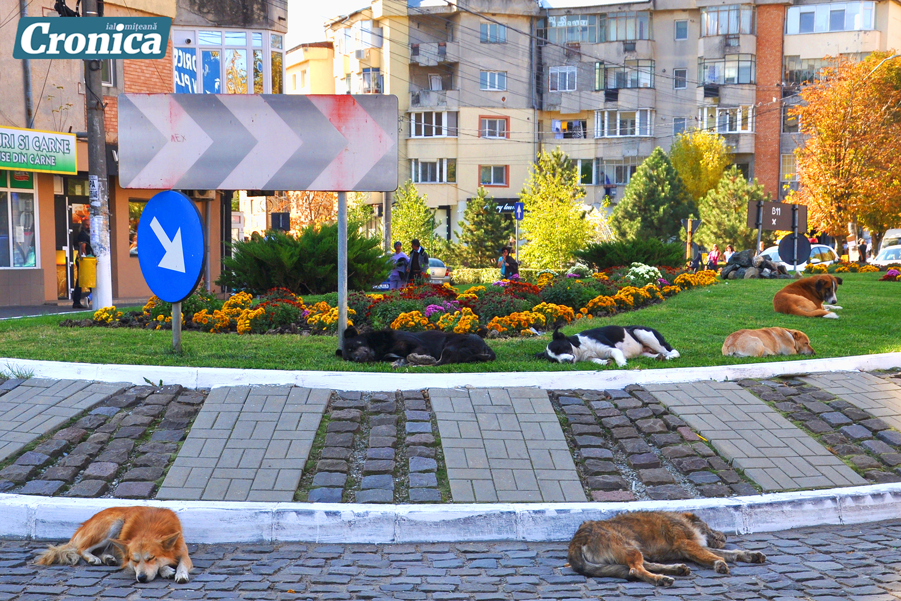 campania de ridicare a câinilor fără stăpân