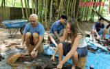 dragnea ayahuasca