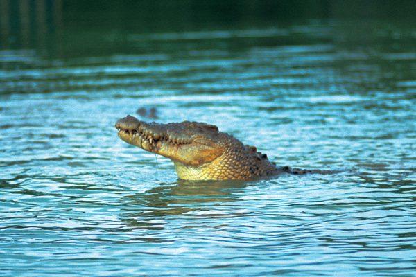 pastor mancat de crocodili2