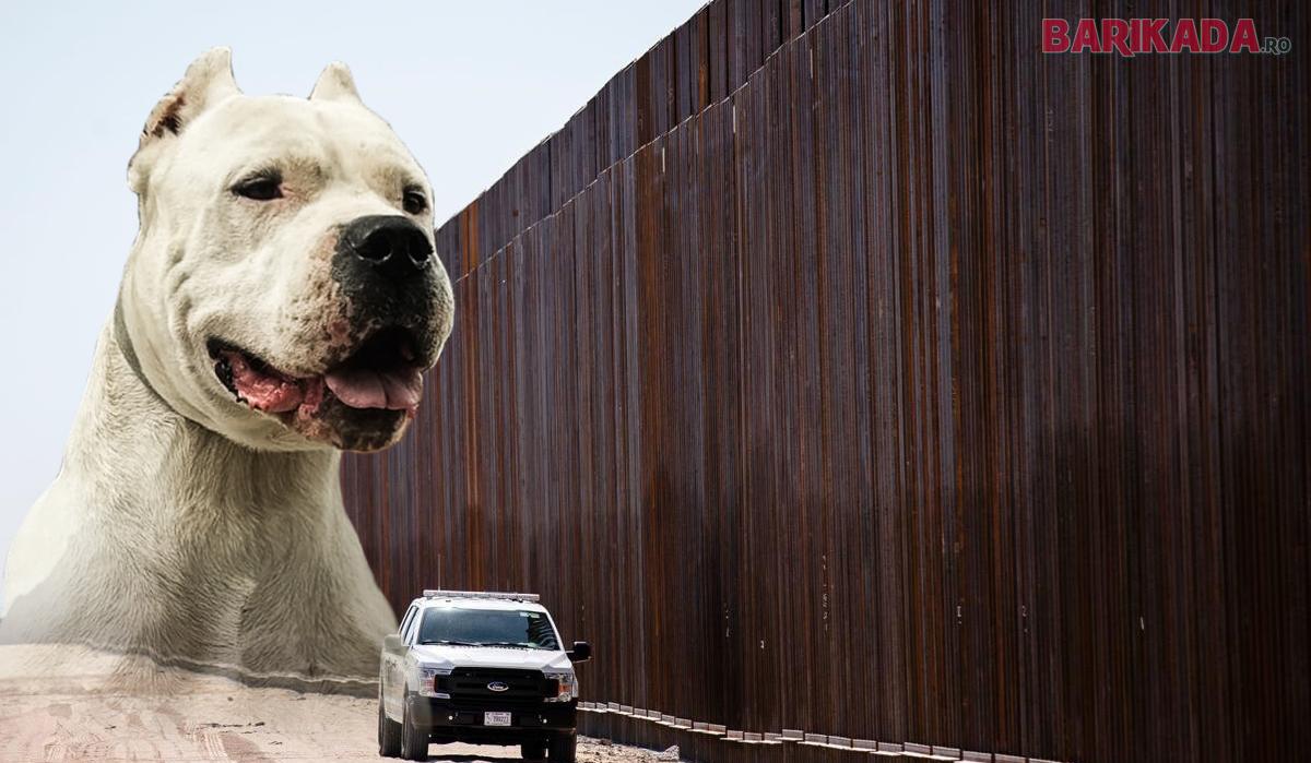 frontiera mexic usa caini olteni