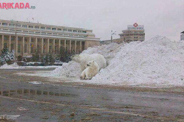 ursi-polari-in-piata-victoriei